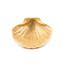 COQUILLE BAPTEME